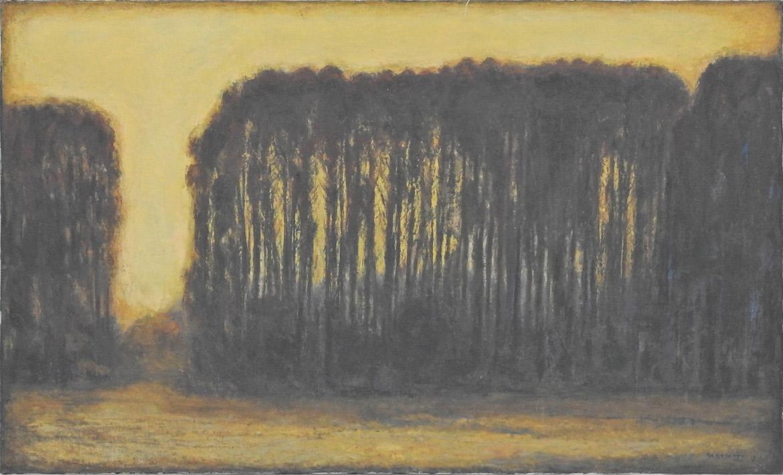 競馬場の杉