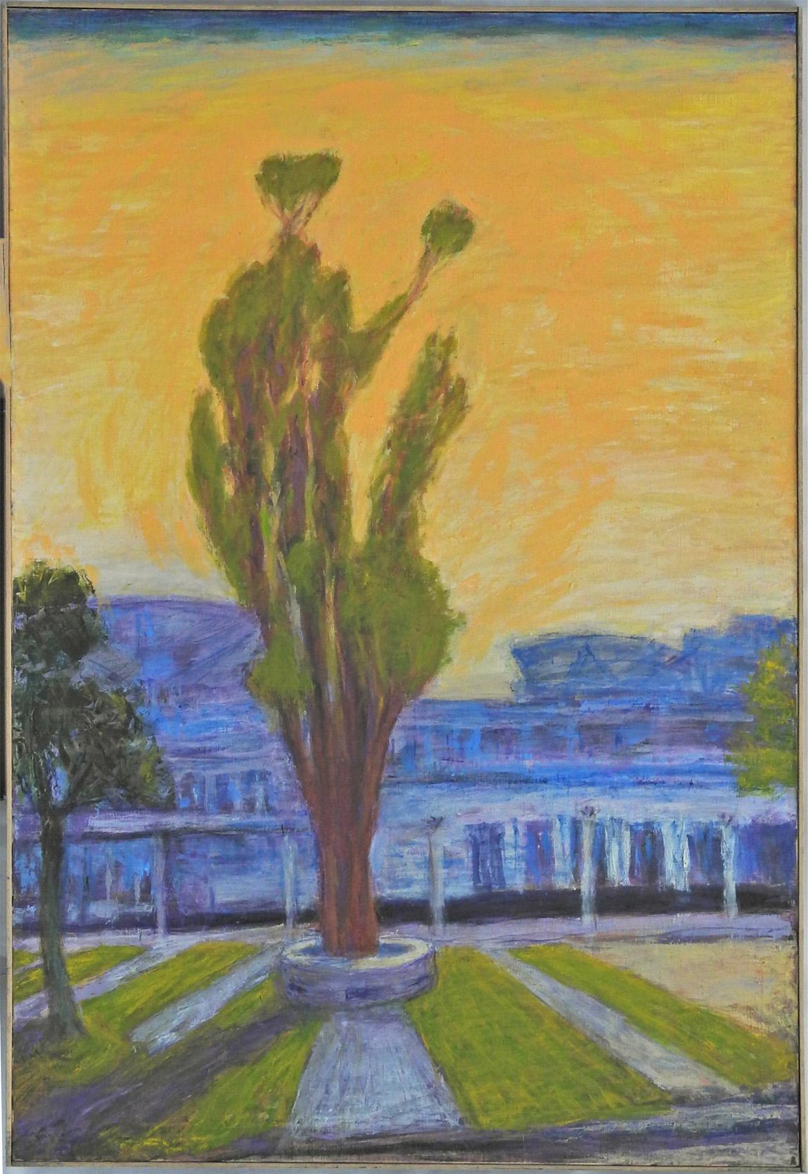 Eucalyptus tree around 1998